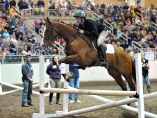 "Alluring Punch A Crowd Favorite <a href="" http://www.chronofhorse.com/article/ottbs-leaving-racetrack-behind "">In RRTP 110-Day Challenge.</a>"
