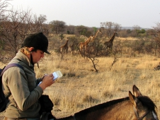 "<a href=""http://www.chronofhorse.com/article/seeing-and-saving-south-africa-horseback"">Giraffe Spotting In Africa</a>"