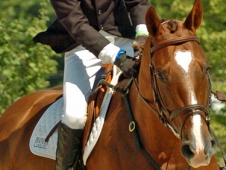 "Ramsay Jumps to Novice Junior Championship At  <a href="" http://www.chronofhorse.com/article/ramsay-jumps-novice-junior-championship-nutrenausea-american-eventing-championships ""> Nutrena/USEA American Eventing Championships</a>"