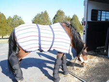 Teaching Your Horse To Load Requires Patience And Smart Handling