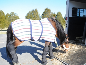 Towing And Trailer Safety Part 7: Safely Handling Your Horses