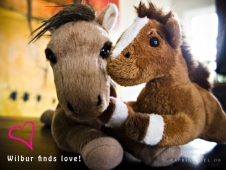 Wilbur Finds Love
