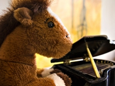 Equine Pianist