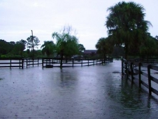 "Pure Thoughts Horse Rescue Is Under <a href=""http://www.chronofhorse.com/article/tropical-storm-isaac-floods-wellington"" >Water In Wellington</a>"