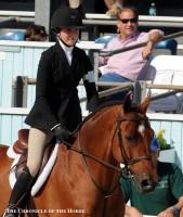 Horse Dies At Devon Horse Show