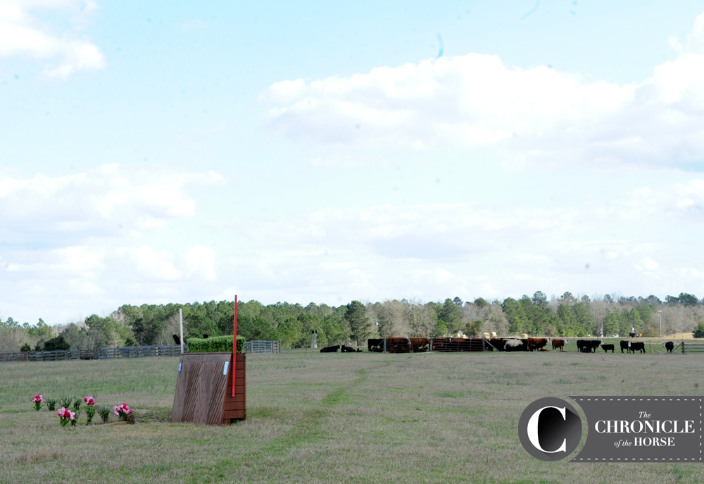Cows keep any eye on the cross-country course at Pine Top Farm. Photo by Lindsay Berreth.