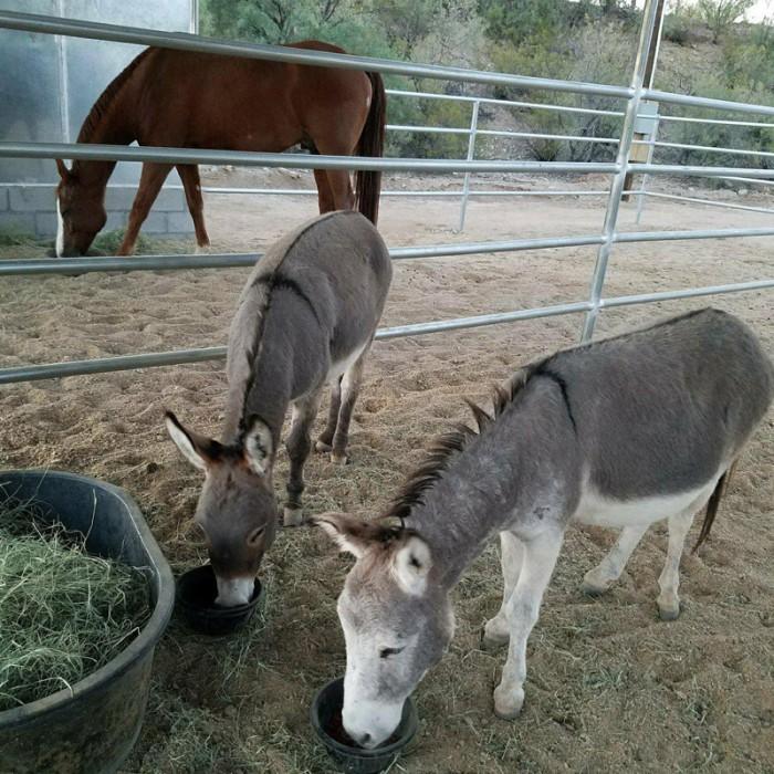1donkeys