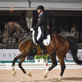 Global Dressage Festival