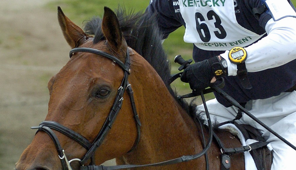Image result for Training Horses is a Risky Business