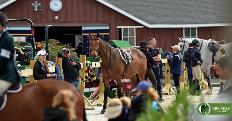 HorseShowStockCOH_3595