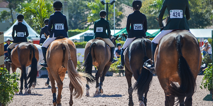 Weu0027ve Put Together A Guide To Some Of The Sights, Sounds, And Terms You  Might Come Across At Equestrian ...