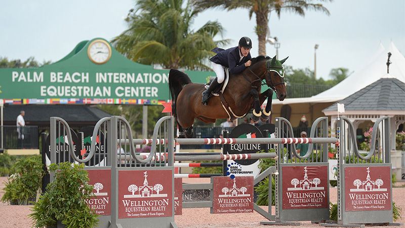 show jumping spiele