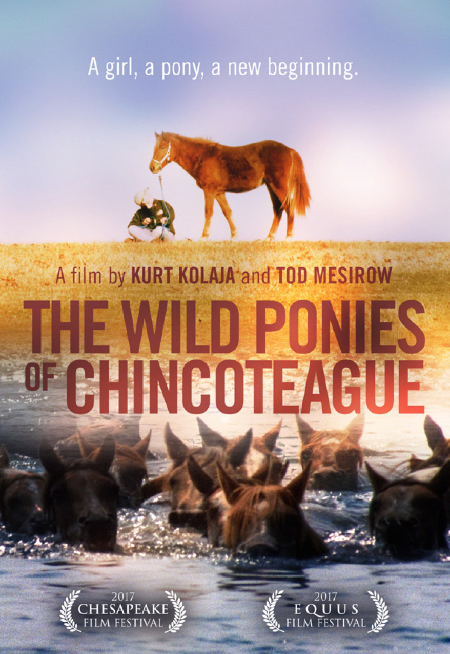 FILM - THE WILD PONIES OF CHINCOTEAGUE